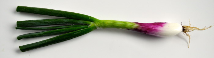 purple green onion