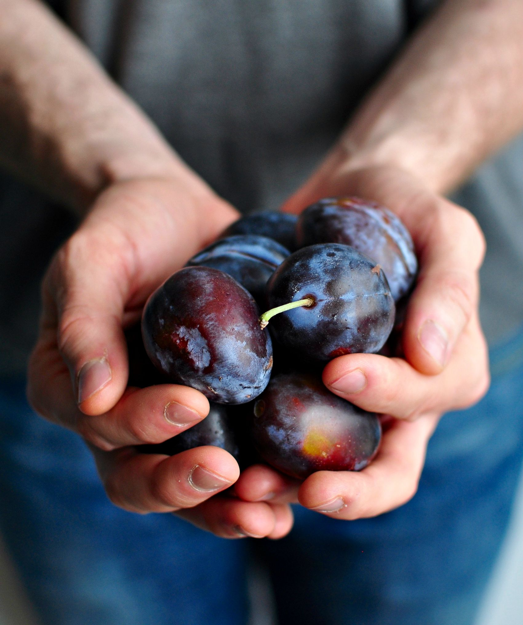 italian purple plums